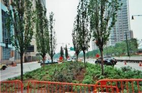 planting6