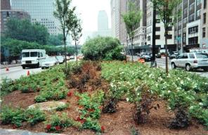 planting7