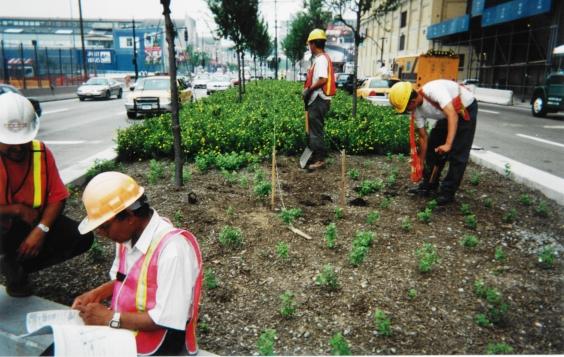 planting8