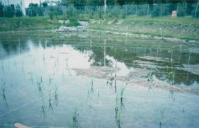 wetland3